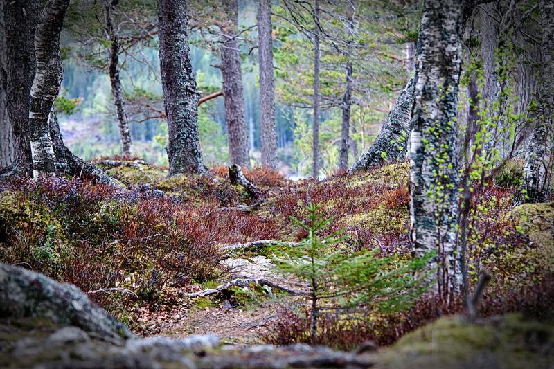 Waldlandschaft mit kleinen Bäumen